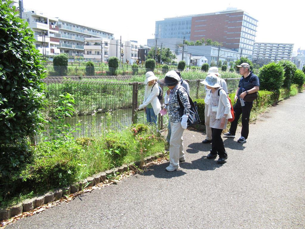 sagamihara_walkrally_04.JPG